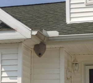Prepare Your Home For Sale - Remove Wasp Nests